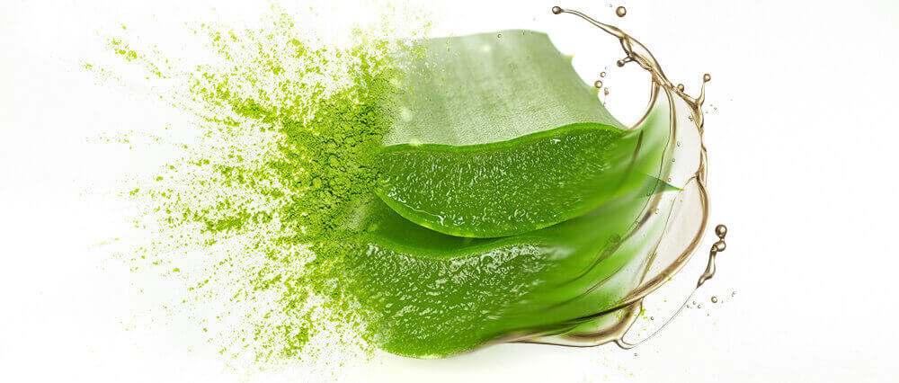 Aloe Vera Gel, Oil & Oil Powder Wholesale Supplier