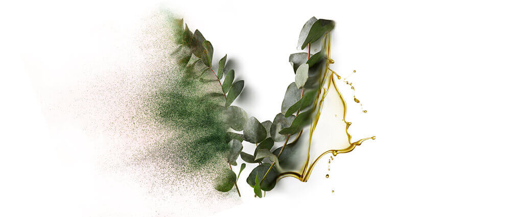 Eucalyptus Oils & Oil Powders Wholesalers & Product Manufacturers