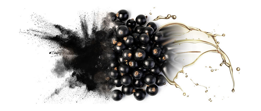 Black currant oils and oil powder wholesale suppliers