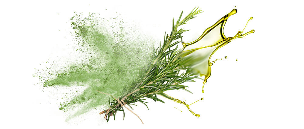 Rosemary oils and oil powder wholesalers & distributors
