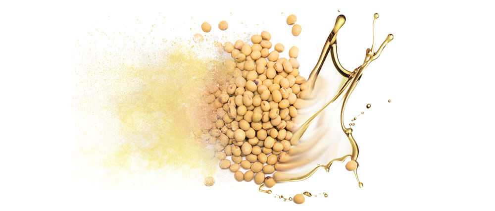 Soy oils and oil powders bulk manufacturing & supply