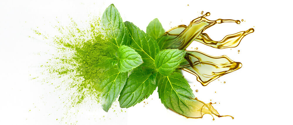 Peppermint oil and oil powder bulk manufacturing & supply