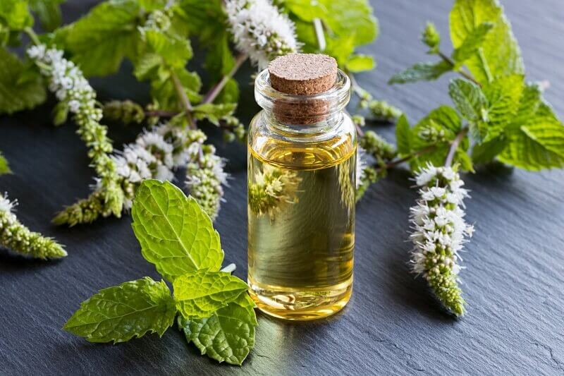 Peppermint extract oil and oil wholesale & distribution