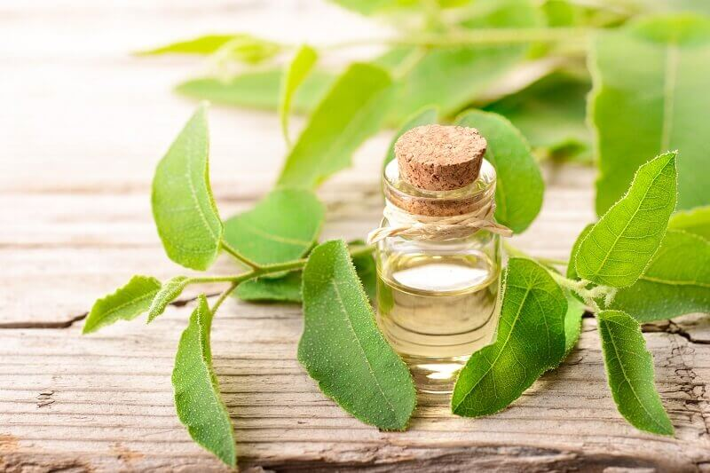 Tea tree oil & oil powder manufactured & distributed for products in bulk