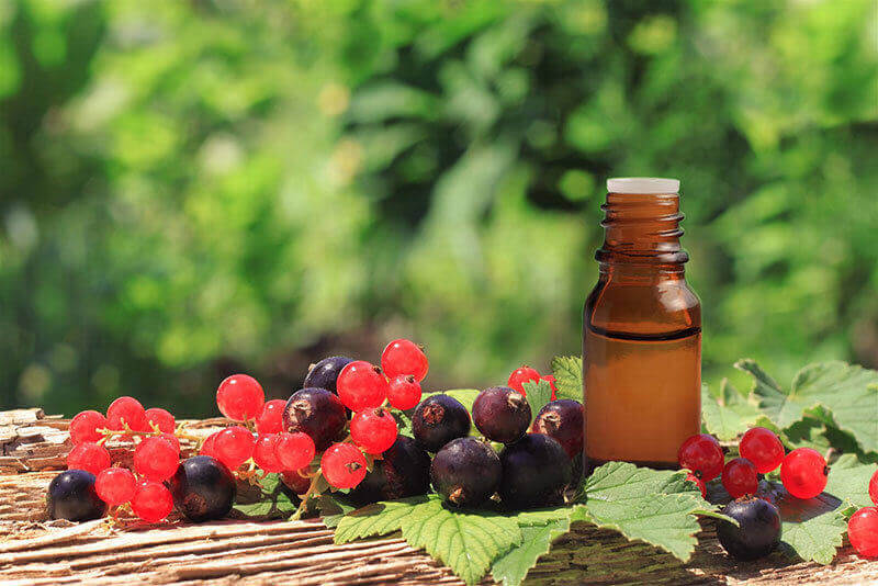 Black currant seed oils & oil powders bulk supply & manufacture