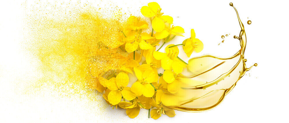 Canola oil and oil powder bulk manufacturing & supply