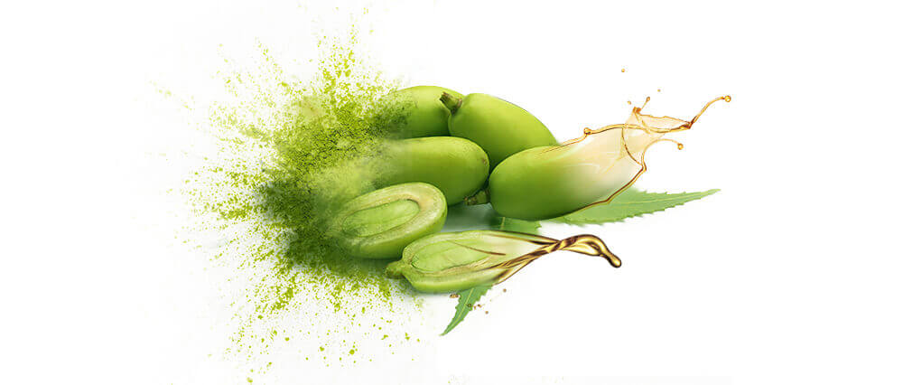 Neem oil and oil powders bulk supplier