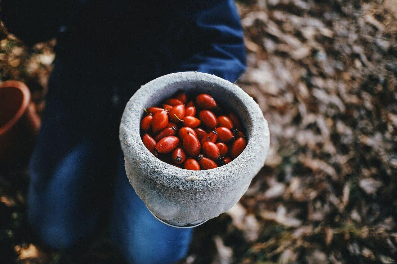 Rosehip oil and powder bulk supply & manufacture