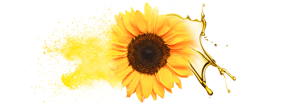 Bulk supply & manufacture of sunflower oil & oil powde